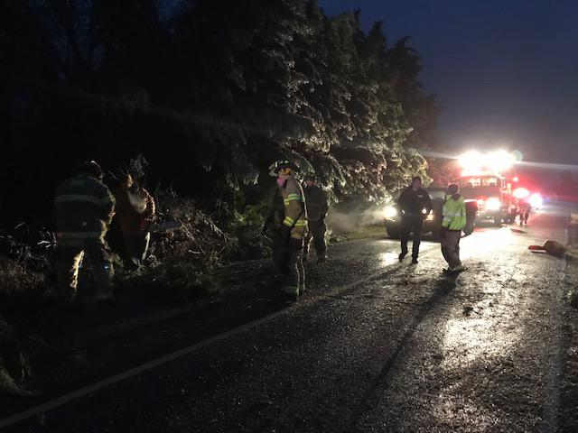 SSFD crews working to remove multiple trees down on Sulphur Springs Road in the early morning.