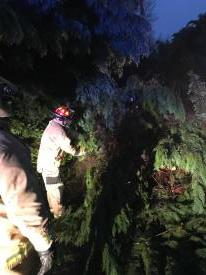 SSFD members utilizing chain saws to removed the down tree in pieces.