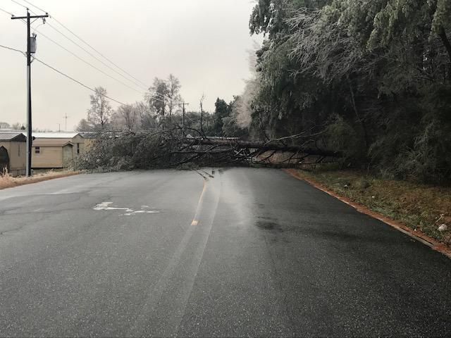 Large tree down at 34th Street Drive NE.